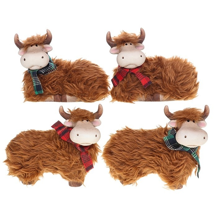 Large Fluffy Highland Coos Posing
