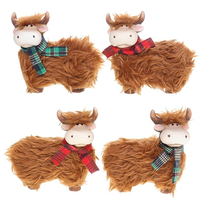 Small Fluffy Highland Coos Standing